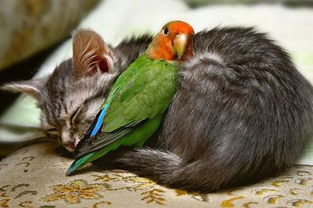 unlikely_animal_friendships_02