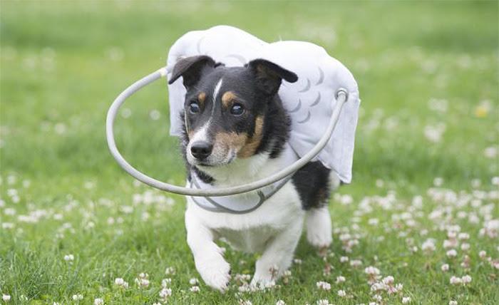 blind-dog-safety-device-muffins-halo-8