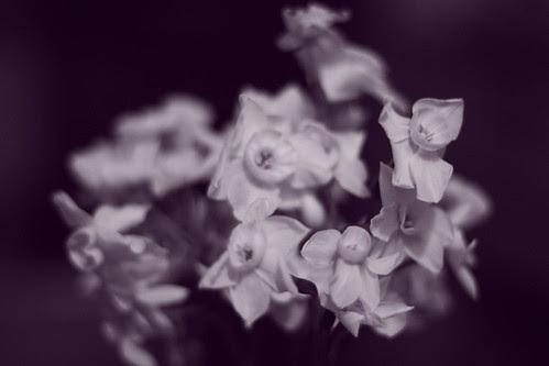 Flowers, vignette