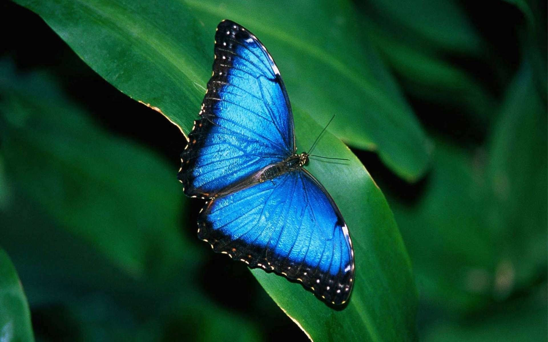 Butterfly HD Wallpaper (68+ images)