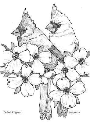 Dogwood Tree Drawings for Sale