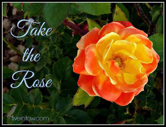 Take the Rose - Five in Tow