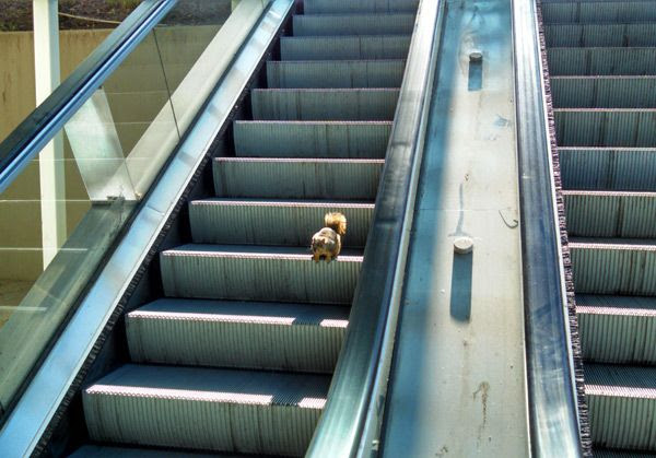A photo I took of a squirrel running down an escalator at Cal State Long Beach, my college alma mater, in January of 2015.