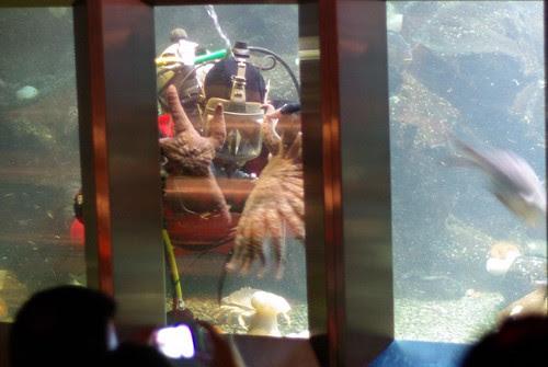 2009-08-26 Undersea Gardens (23)