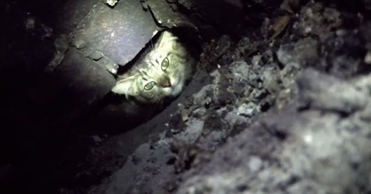 This is how a team of people rescued one cat stuck up a chimney for FOUR days