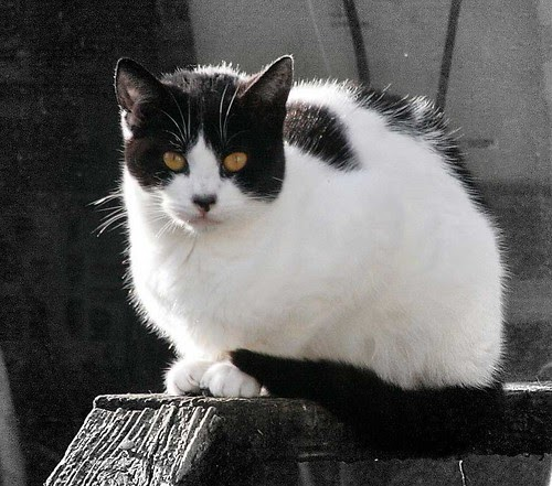 The Feral Life Compassion Cats Reemergence Of Cow Cat