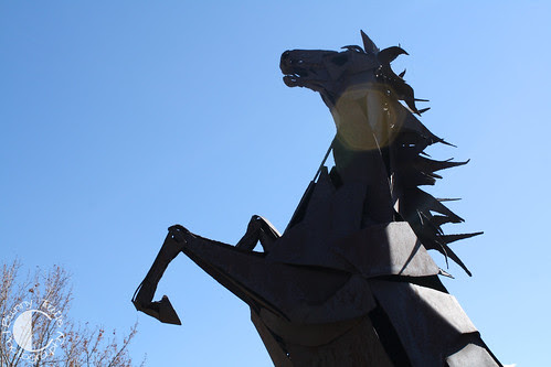 sharp horse-3