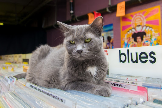 Shop Cats of New York: Discover the fascinating stories of cats living in NYC shops