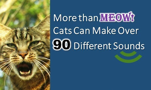 Cool Cat Facts - 10 Amazing Fun Facts about Cats | Interesting Facts