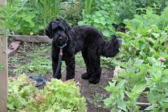 skippy in the garden 8