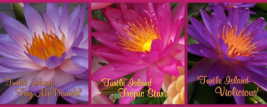 HXT™ Trio Now Available Individually! - Turtle Island Waterlilies
