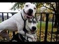 Lustige Hundebilder Mit Spr Hen