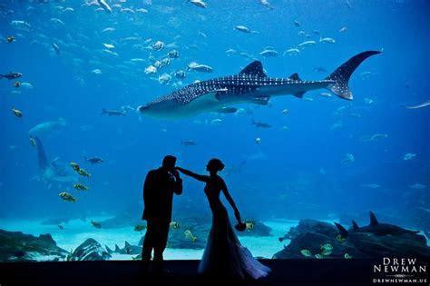 25  best ideas about Aquarium Wedding on Pinterest   Sea