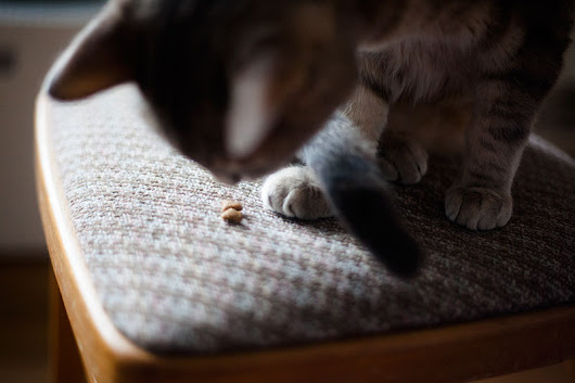 Feline Digestive Issues? Sensitive Stomach Cat Foods (Wet/Dry) You Can Try