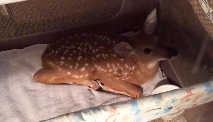 dog-saves-drowning-baby-deer-storm-6