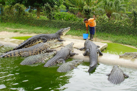 Start Your Own Crocodile Farm And Get A Big Bite Of The Growing Demand