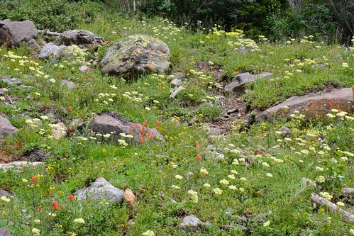 Wildflower Hillside