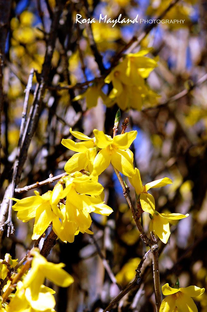 Spring 2013 8 3 bis