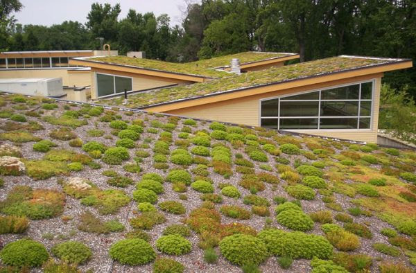 GREEN ROOF (6)