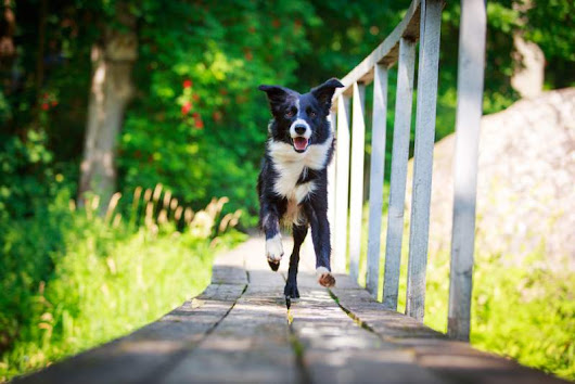 Altamonte Springs DUI Lawyer – Is it legal for neighbors to let their dogs run loose?