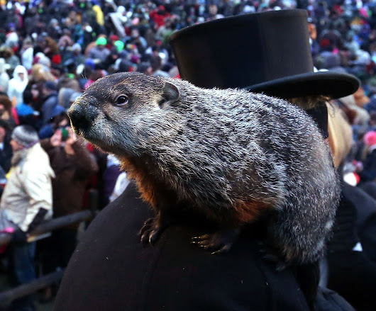 Groundhog Day 2016: Punxsutawney Phil sees no shadow, predicts early spring