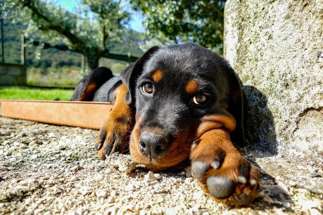 Are Some Dog Breeds Really More Aggressive?