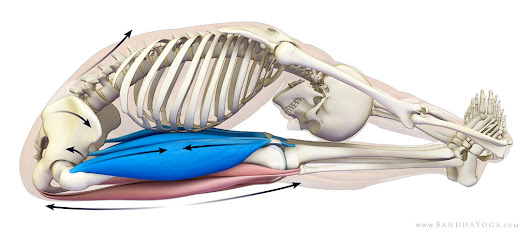 Preventative Strategies for Lower Back Strains in Yoga: Part One