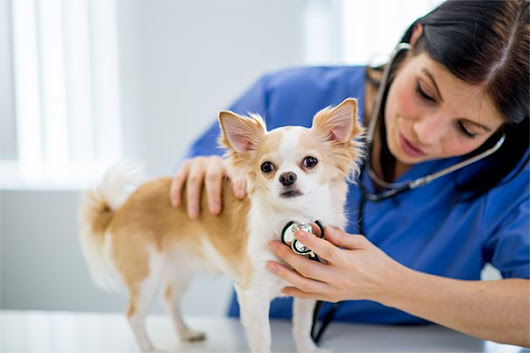 Top 10 Reasons to Take Pets to the Vet