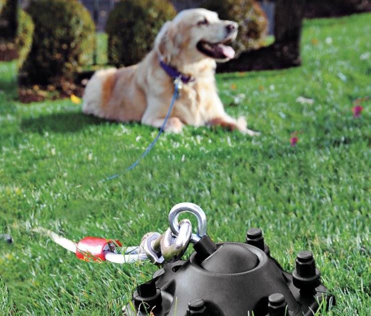 Dog Backyard Leash - BACKYARD HOME