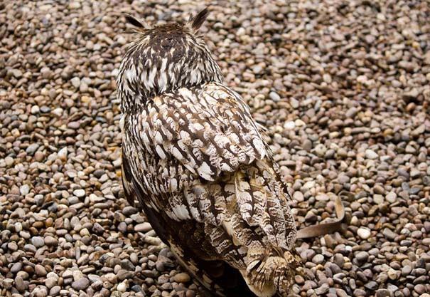 Απίθανες φωτογραφίες ζώων που είναι μετρ του καμουφλάζ (5)