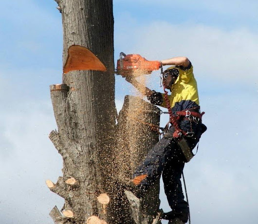 How to Find the Right Tree Service Providers in Melbourne?