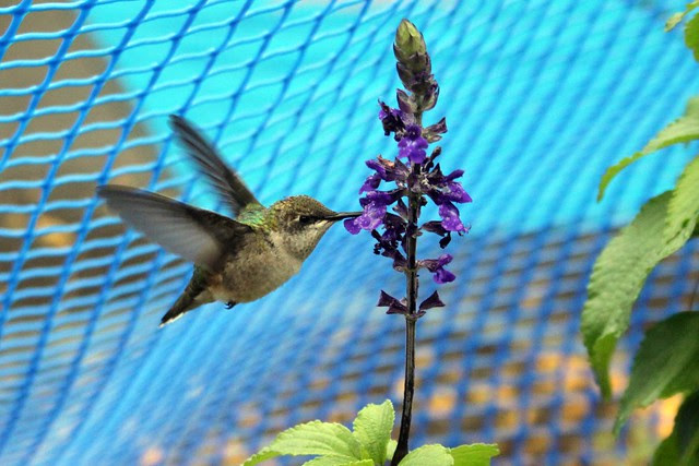 humming bird at the finish line