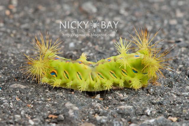 Caterpillar - DSC_2151