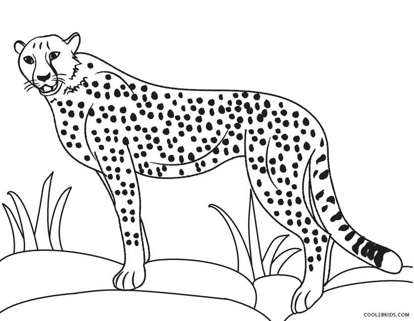 Cheetah Family Coloring Page Free Printable Coloring Pages Coloring Pages