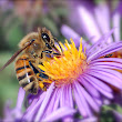 Bees can sense—and learn from—the electric fields of flowers