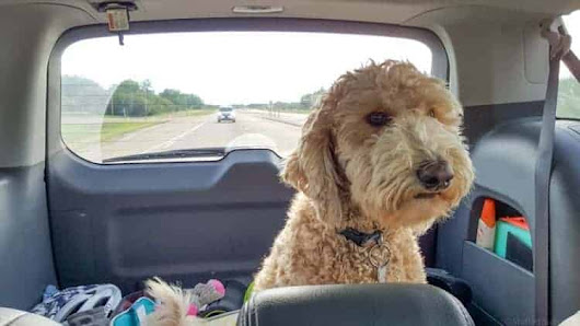Tips for Traveling on a Road Trip with a Dog