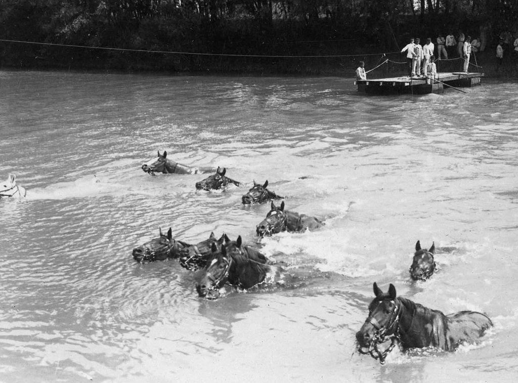 Os animais também lutaram na Primeira Guerra Mundial 42