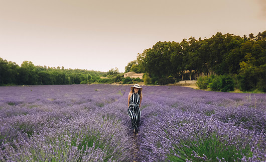 Visiting lavender fields in the Provence • Along Came An Elephant