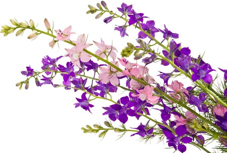 http://us.123rf.com/450wm/ksena32/ksena321205/ksena32120500309/13725097-bouquet-of-wild-flowers-isolated-on-white-background.jpg