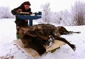 Kebanyakan orang merasa jijik untuk mengonsumsi daging mentah 4 Orang di Dunia yang Hobi Makan Daging Mentah