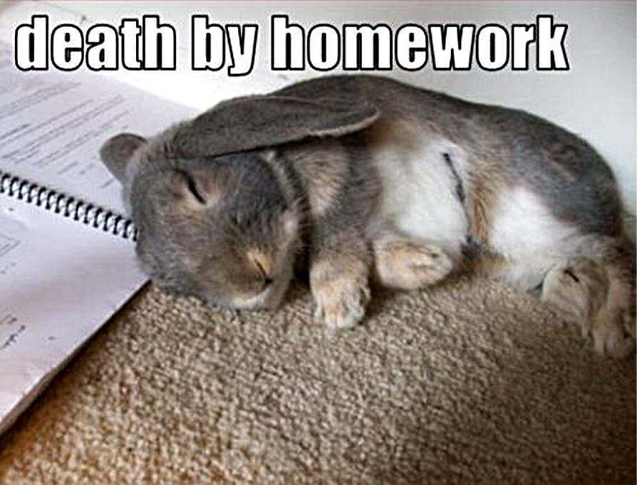 Animal Humor images bunny funny wallpaper photos 19947889