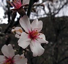Invernablog c mo plantar rboles frutales - Como plantar arboles frutales ...
