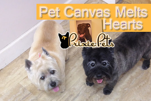 Pet Canvases Melt Owners Heart