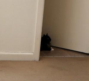 bathroom-cat1