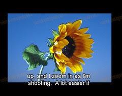 strobist_dvd_bonus_sunflower_4
