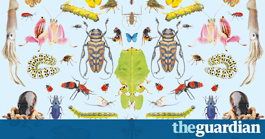 'A different dimension of loss': inside the great insect die-off | Environment | The Guardian