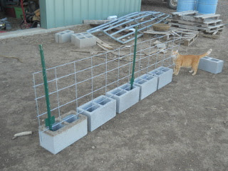 3-foot t-posts wired to cattle panel