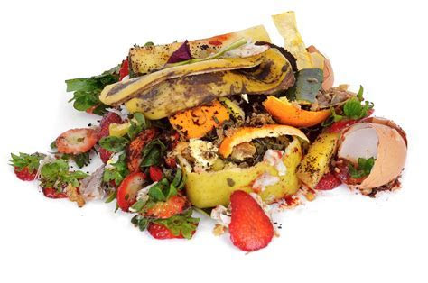 Food Waste Is an Environmental Problem   At the Edge   US News