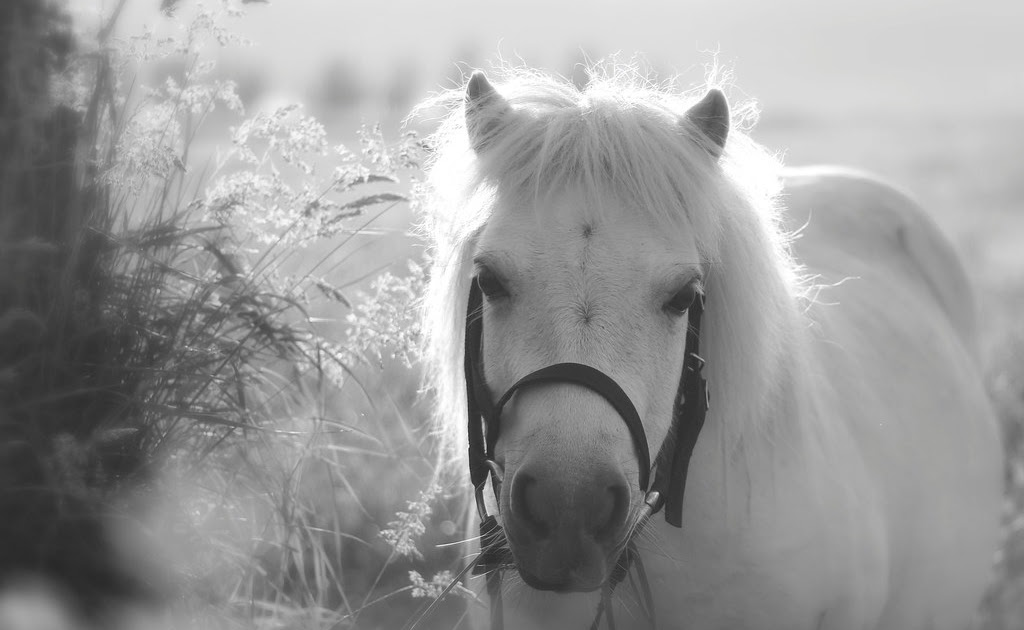 Wordless Wednesday #82 ::: Blue Belle's Bridle