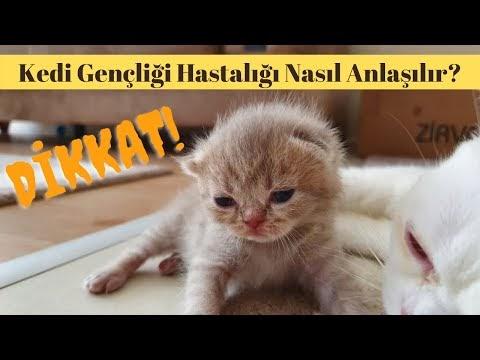 Kedi Gençlik Hastalığı Nedir? Tehlikeli Kedi Hastalıkları
